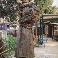 13. Mother and Child, oak, Pulross Road Brixton, London